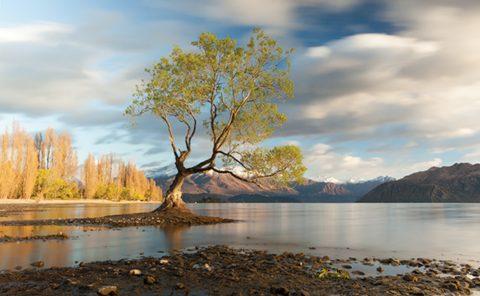 Wanaka Tree, Wanaka, Central Otago