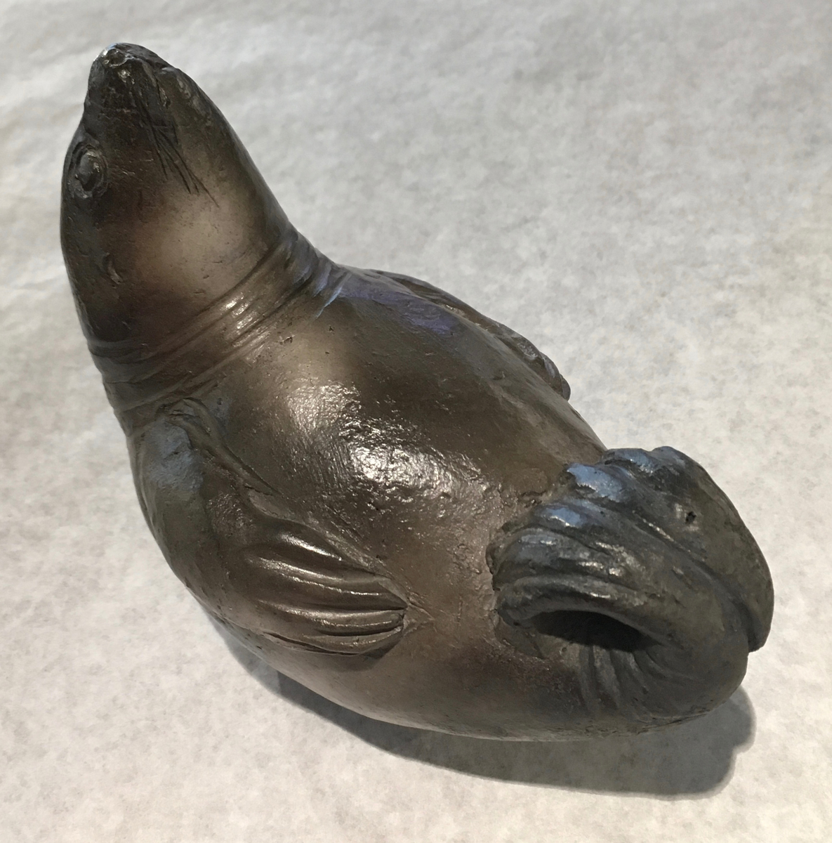 Adult seal