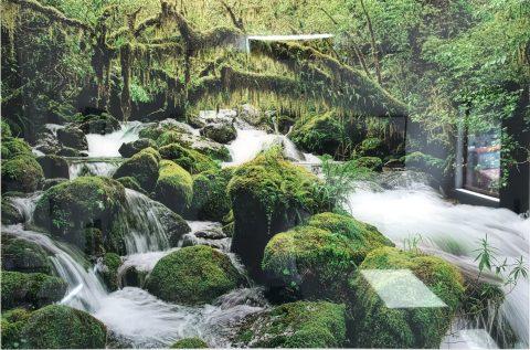 Moss Stream, Fiordland