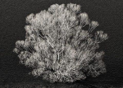 Tree in water, Lake McPherson
