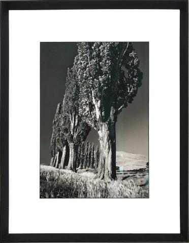 Italian Poplars