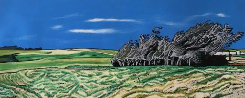 Windswept trees, Slope Pt., Catlins, Southland, New Zealand