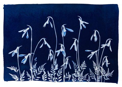Wildflower Series - Spring 1