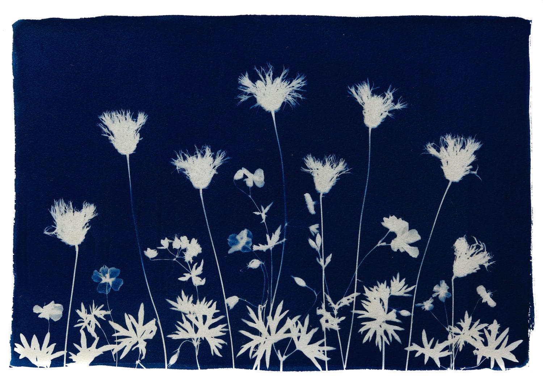 Wild Flower Meadow  Spring V