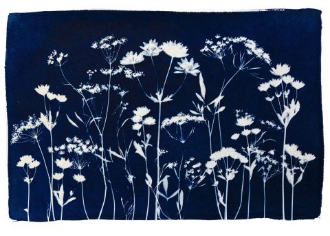 Wild Flower Meadow  Spring IV
