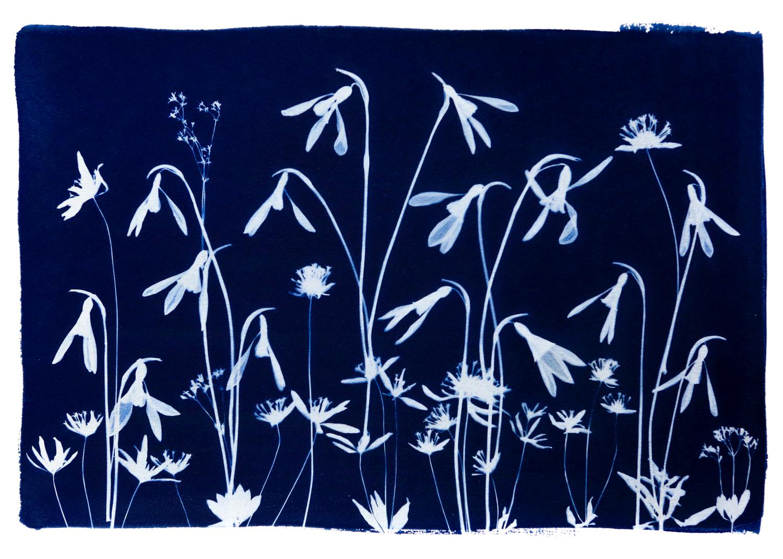 Wild Flower Meadow  Spring III