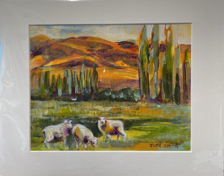Central Otago Sheep