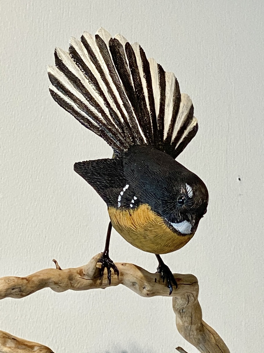 Fantail on branch (Tree root)