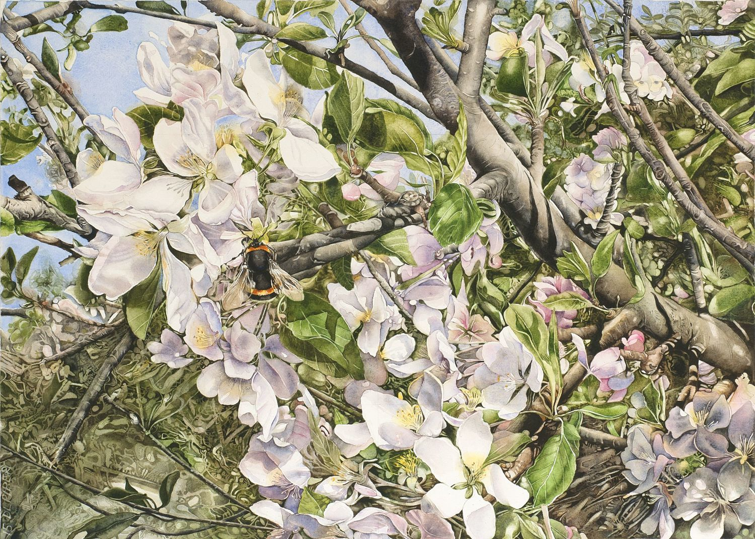 Apple Blossom with Bumblebee