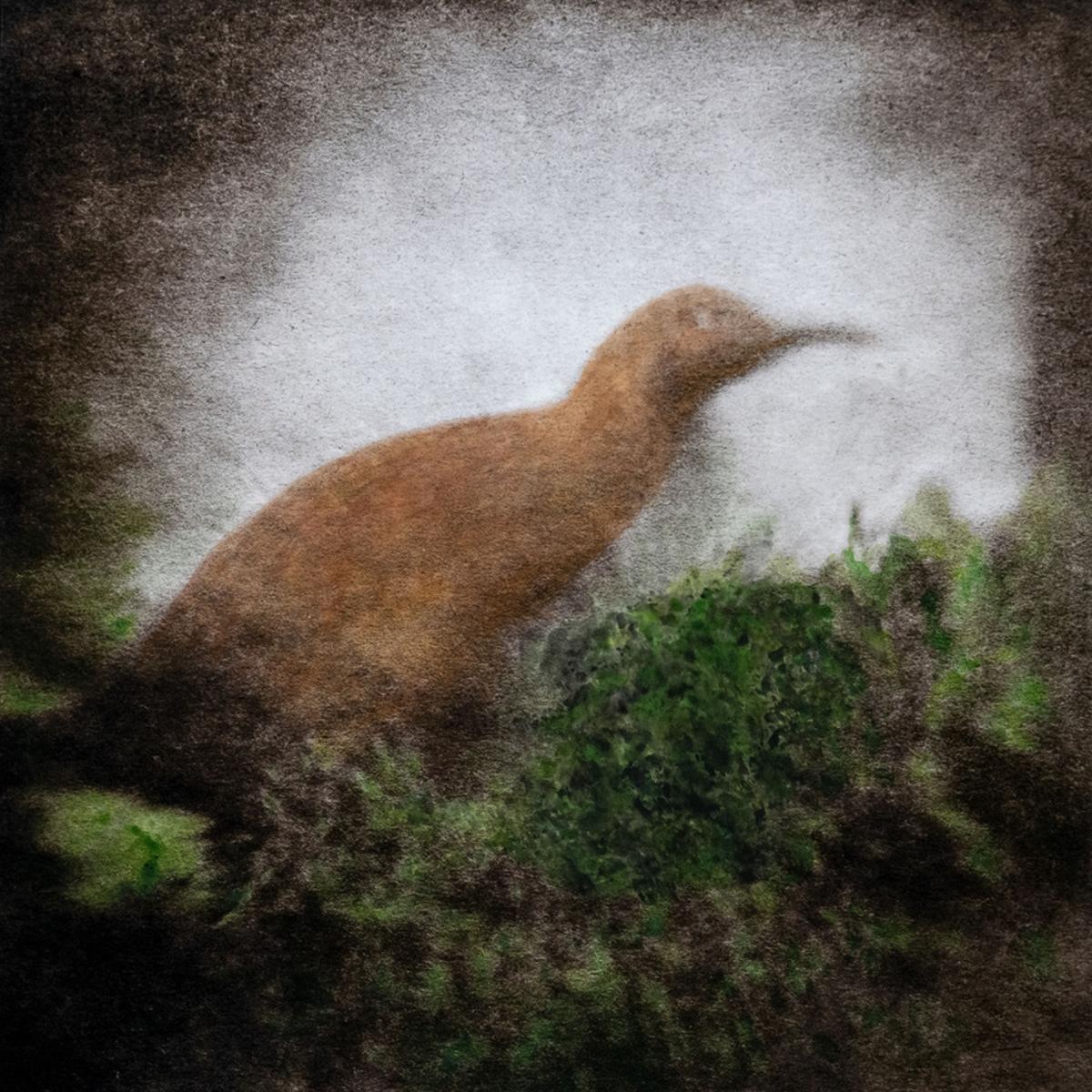 Dead Silence (Hawkins Rail) - Solo Exhibition