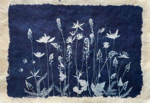 Wildflower Meadow for Rachel