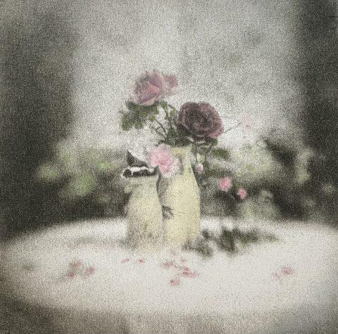 Fair Musk Rose Blooms